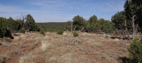 39.6 Wooded acres in Shadow Rock Ranch, Seligman, AZ