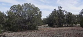 Lot 58 Shadow Rock Ranch, 40 Acres